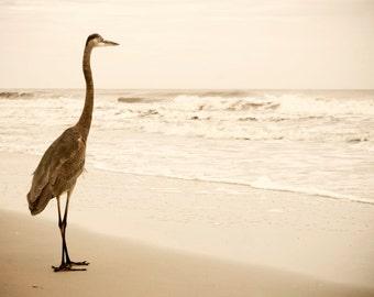 Heron Print, Fine Art Photography, Nature Photography, Seaside
