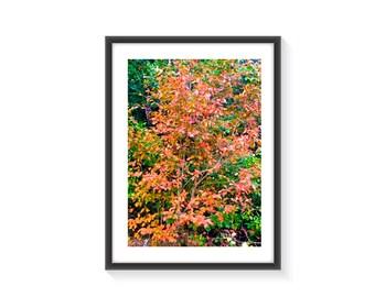Red Leaf art print A4 framed