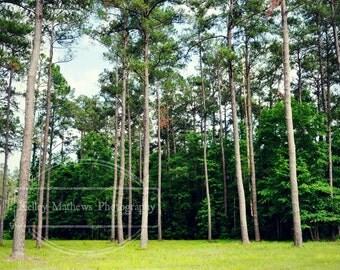 Carolina Pines 5x7 matted to 8x10