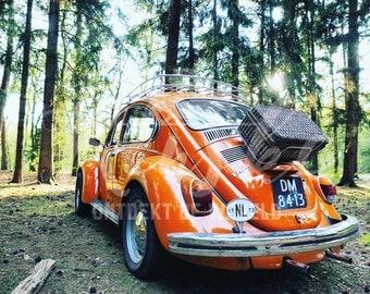 Woods, Volkswagen Beetle Orange