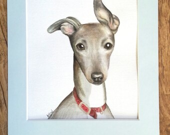 Lovable Whippet (an original,  not a print)