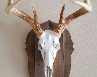 European Mount on Reclaimed Wood