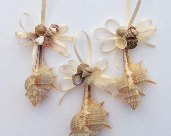 Natural Ternispina Sea Shell Ornaments-Set of 3 Seashell Ornaments