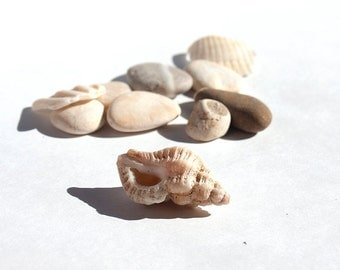 INTERESTING BEACH MIX Lovely set of unusual creamy white pebbles + shell fragments remnants ivory tan natural brown decorative vase filler