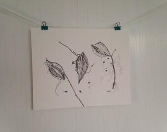 Original Milkweed Pods Ink Drawing, Botanical illustration, Black and White Nature Drawing Illustration, 8 x 10