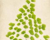Botanical Print, Large Wall Art, Fern Art Print, Forest, Nature Photography, Large Print, Nature Print, Maidenhair Fern, Botanical Art