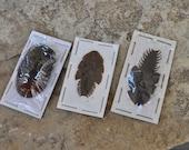 WYSIWYG: 3 Mystery Invertebrates