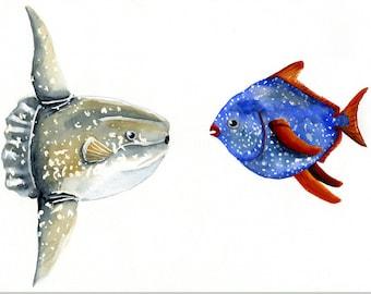 Sunfish Moonfish watercolor print