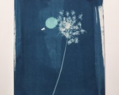 Small Queen Anne's Lace Cyanotype No. 1