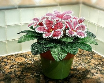 Gloxinia (Free Shipping) -- French Beaded Flower Plants