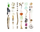 Coast Walk 1 - 8 x 8 photograph - sea glass, shells, seaweed, bones, flotsam