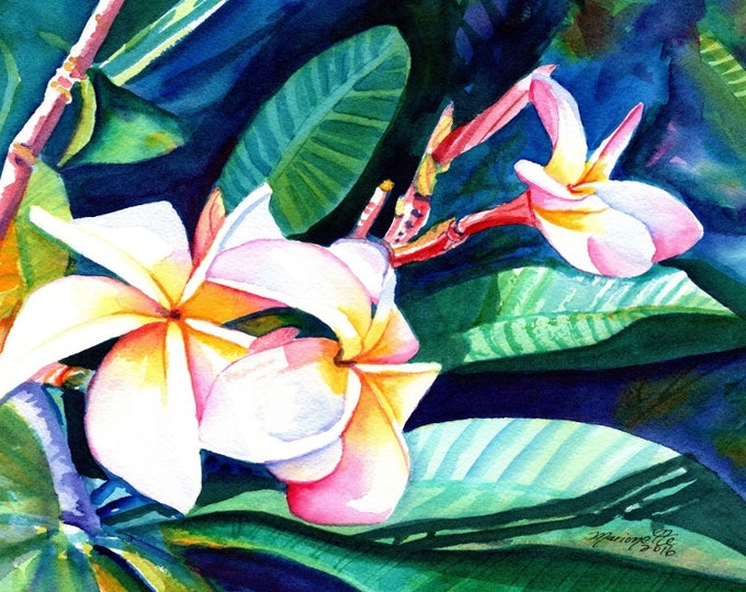 Blooming Plumeria,  5x7 art prints, Kauai giclee, Hawaiian flower art, frangipani, Hawaii interior decor, Plumerias, Kauai art,