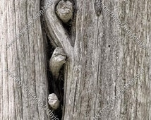 Digital Photo Download, Real Old Weathered Grey Wood, Long Wood Texture, Gnarled Tree Trunk with Fissures, Background Stock Photo
