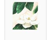Floral Study No. 1- Archival Print