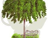 Elm Tree Digital Vintage Printable Illustration Clip Art Large Image Download Botanical Graphic