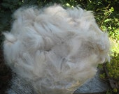 Beige Alpaca 'Avalanche' 1/2 pound, Not Washed, 3-inch Staple, Straight Fiber, 24-Micron with Soft Feel, Spinning Fiber Felting Fiber