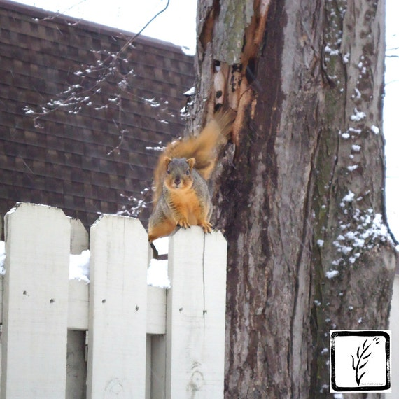 Color Photograph, photo print, fine art, wall art, home decor, nature, squirrel, photography, Winter, haiku, animal, Indiana, attitude
