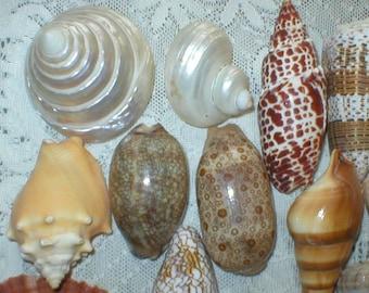 Seashells 20 Piece Collection Nautical Wedding Decor