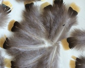 LOOSE PHEASANT FEATHERS  Natural not dyed , 24 pieces / 750 - 1