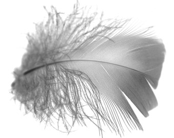 Fine Art Photo. Black and White Feather