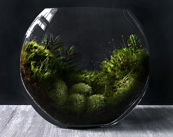 Glass Moon Bowl Terrarium with Live Woodland Plants Desktop Decor