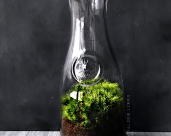 Moss Terrarium in Large Milk Bottle