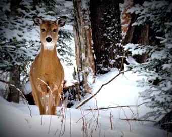 Digital Download Photography..Wisconsin North Woods Deer..printable wall art..wildlife photo..cabin decor..winter..snow...evergreen trees