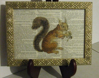 Squirrel Framed Print on Vintage Dictionary Page