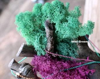Reindeer moss-Pink or Mint Green Reindeer moss-Deer foot moss-2 oz sandwich bag of Preserved Lichens-assorted sized spongy soft balls