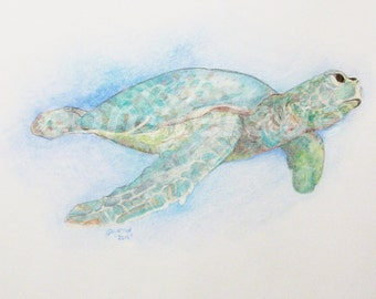 sea turtle color pencil drawing image size 9x11 paper size 14x17 unframed