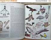 70% OFF CLEARANCE BOOK // Birds - Their Life - Their Ways - Their World // Readers Digest // 1979