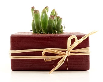 Rustic Red Wood Gift, Guest Favors - Succulent, Cactus, Haworthia, Air Plant, Mix - Wedding, Bridal, Baby Shower, Event