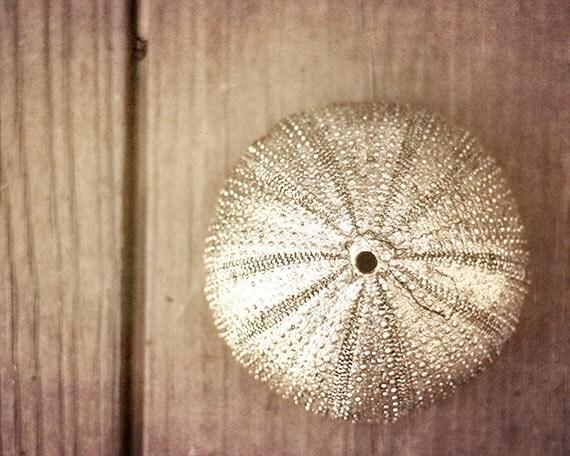 Sea Urchin Wall Decor,  Seashell Photography, Beach Decor, Silver Wall Art, Fine Art Photography, Coastal Wall Art, 11x14, 16x20, 20x24