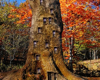 Brownstone Tree - 16 x 20...surreal nature fantasy photograph / fine art print
