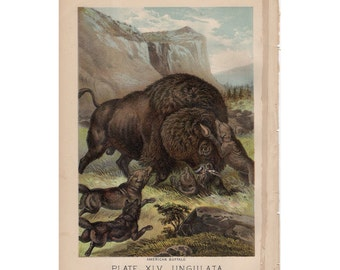 1880 BUFFALO ANTIQUE LITHOGRAPH original antique animal print