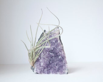 Unique Air Plant Display, Amethyst Geode, Airplant Crystal Garden, Gift For Gardener, Naturalist, Plant Lover, Boho Decor, Ready To Ship