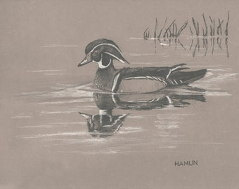 Wood Duck Drake, FSNP - Open edition print of an original drawing (fits 11x14 frame)