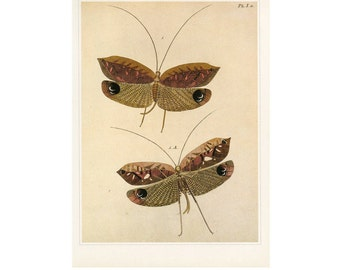 Butterflies Dragonfly Print Book Plate SALE Buy 3, get 1 Free