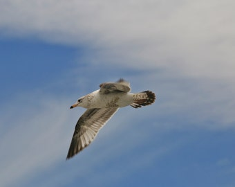 Seagull Photography, Bird Photography, Wildlife Photography, Nature Photography, Wall Art, Home Decor,