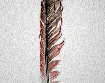 Cardinal Feather Study 318 - Original Watercolor - Nightly Study
