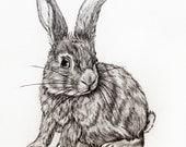 Original Pencil Drawing - Bunny 23