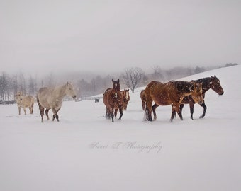 """Fine Art Photograph """"Horses In The Snow"""" Large Wall Art Cabin Rustic Decor Print Cowboy Farm Mountains Winter Brown White Western Country"""