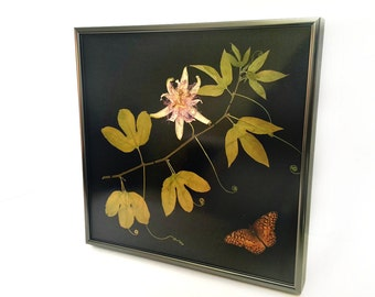 Framed Butterfly and Framed Botanical Home Decor - Real Pressed Herbarium and Taxidermy Mount - Maypop and Variegated Fritillary