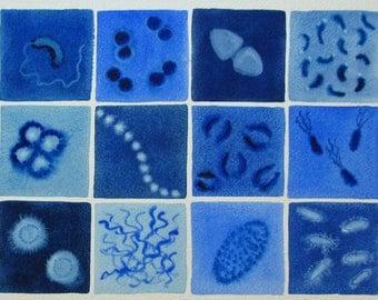 Blue Bacteria  - original watercolor of microbes