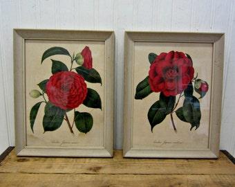 Set of Vintage Wood Framed Red Camellia Flowers Prints Pictures