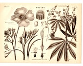 Cassava Plant Antique Book Plate Print 1878 - Vintage Book Illustration Home Decor, Nature, Botany, Flowers, Collage, Art, Craft Supplies