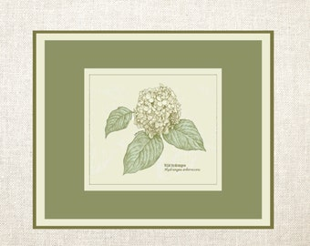 Botanical Hydrangea Note Cards