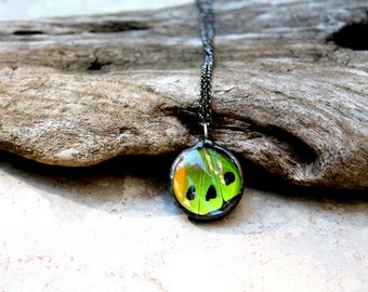 Round Green Butterfly Gunmetal Necklace, Real Butterfly Jewelry