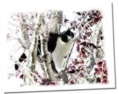 Tuxedo Cat In A Tree Card, All Occasion Blank Note Card