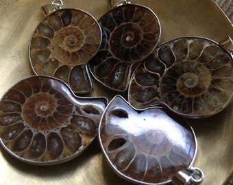 Ammonite pentant silver plated brass polished fossil one pendant 1-1.25 inches 4mm hole